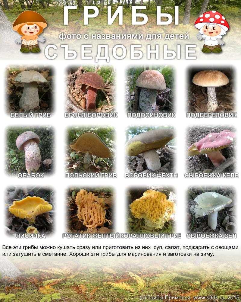 ведь человек фото и названия всех видов грибов как только