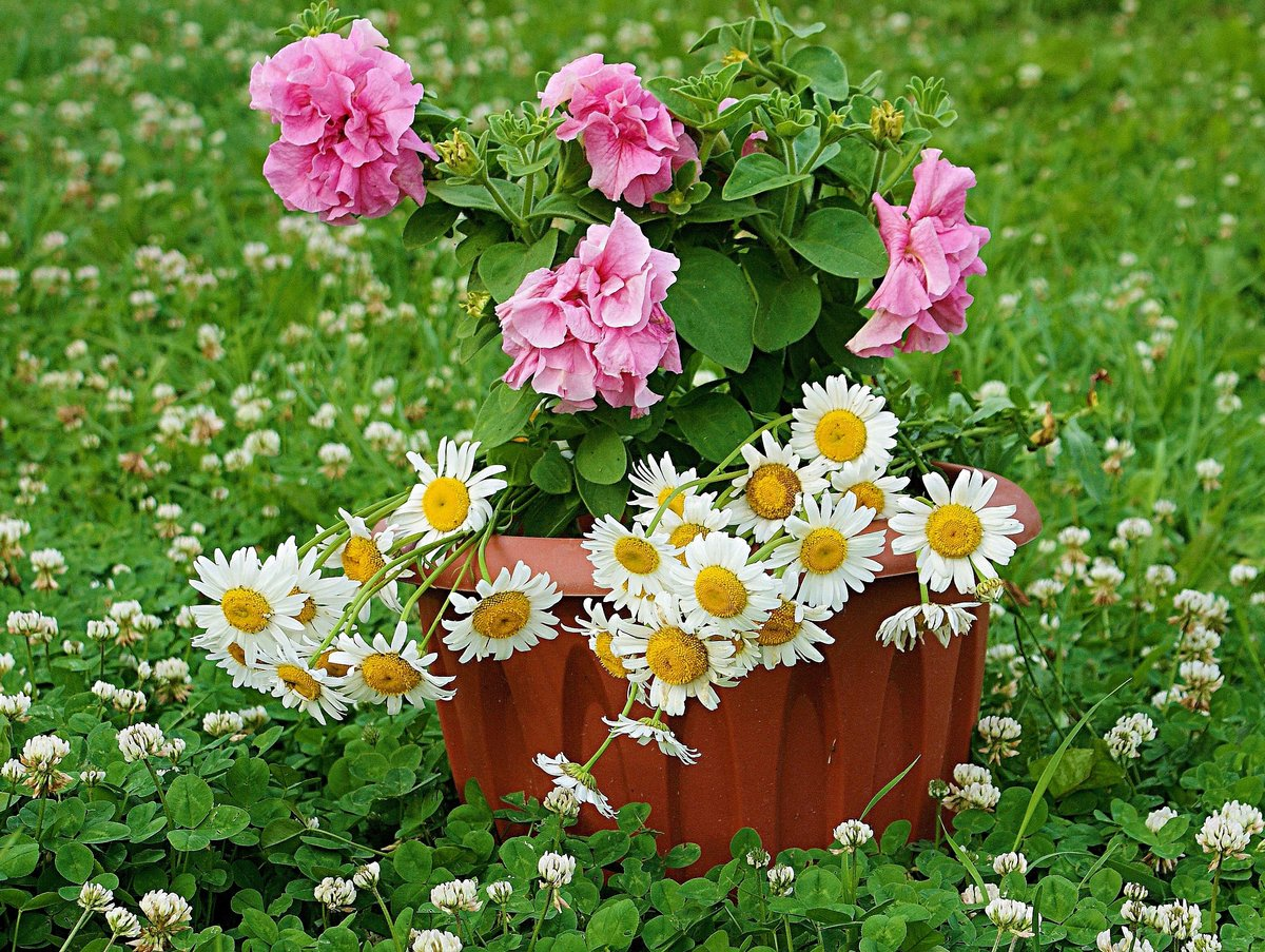 цветы для дачи фото картинки его основе