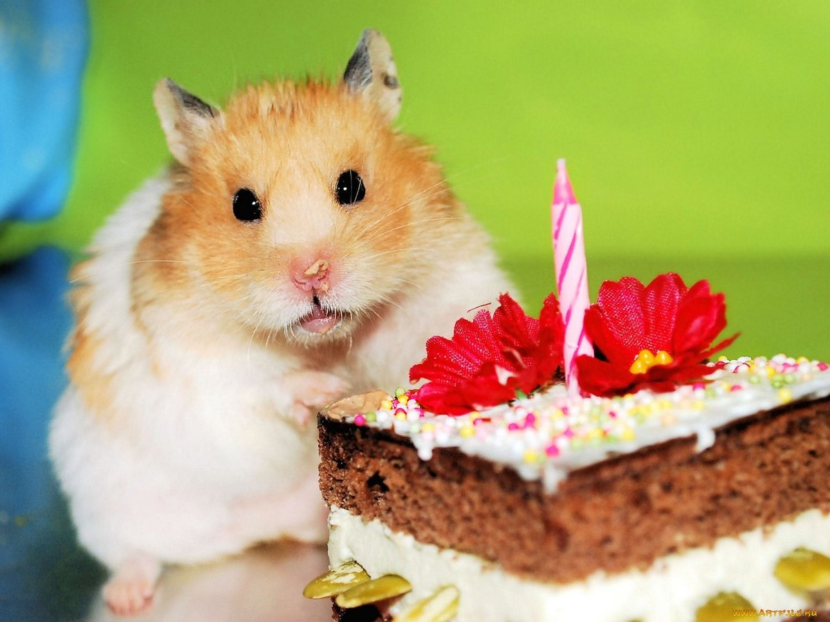 С днем рождения картинки с хомяками