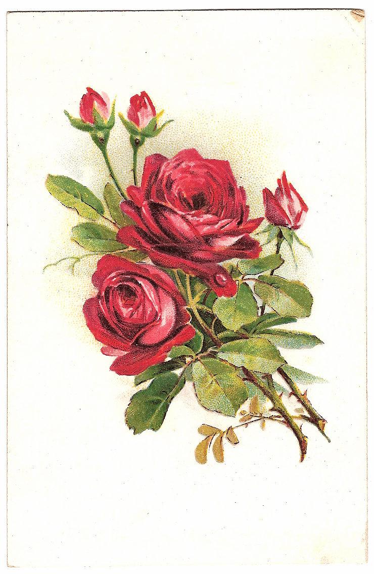 Днем юриста, открытка цветы нарисованные