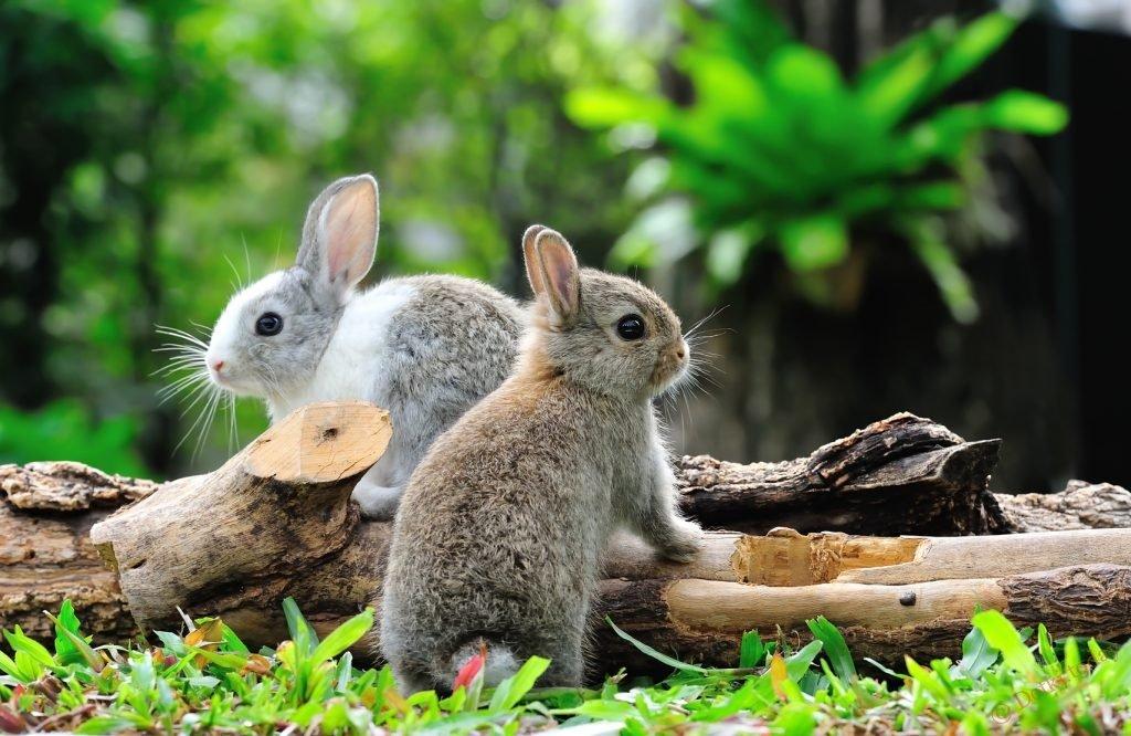 Картинка с зайчатами, днем рождения цветами