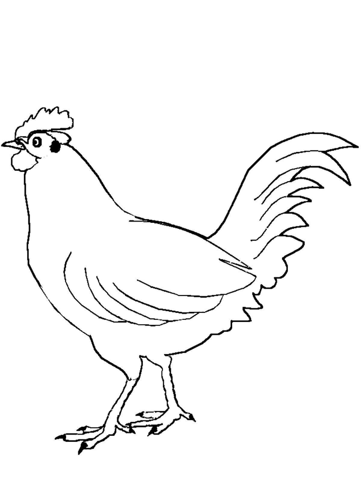 Картинки домашние птицы карандашом