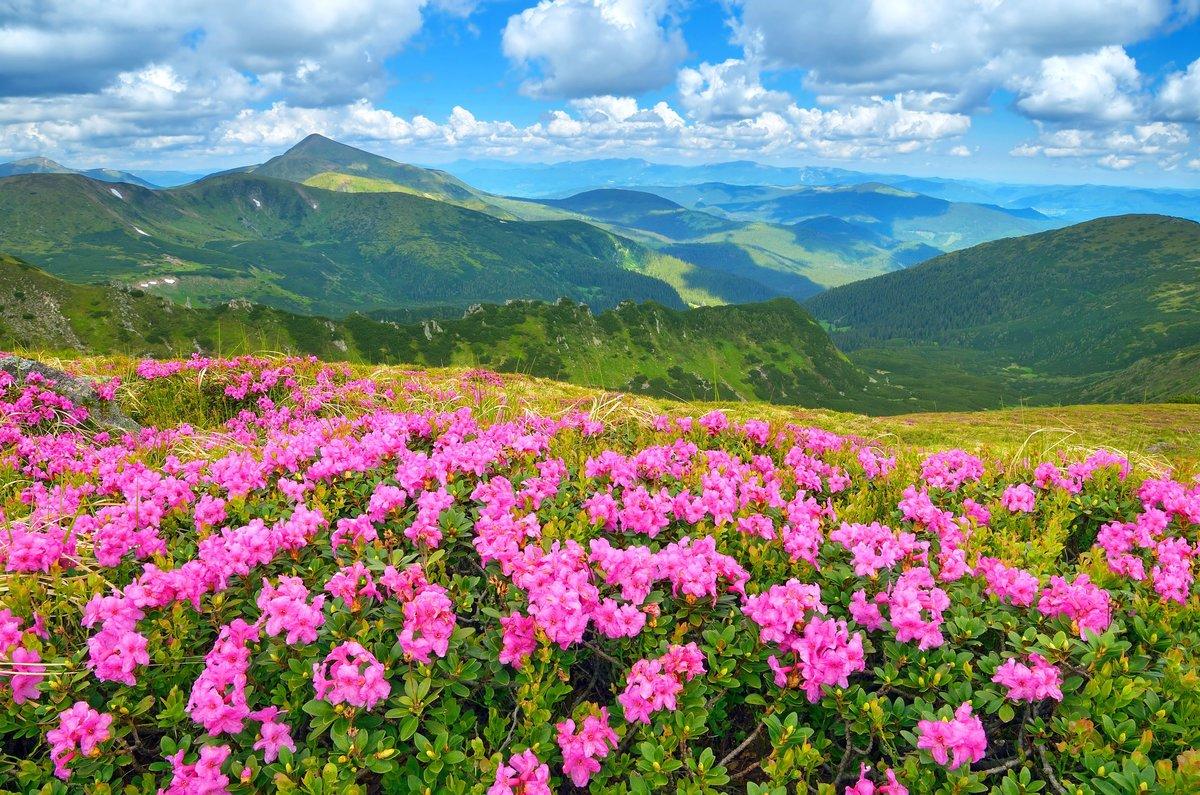 Горы гифка, картинки горы и цветы красивые