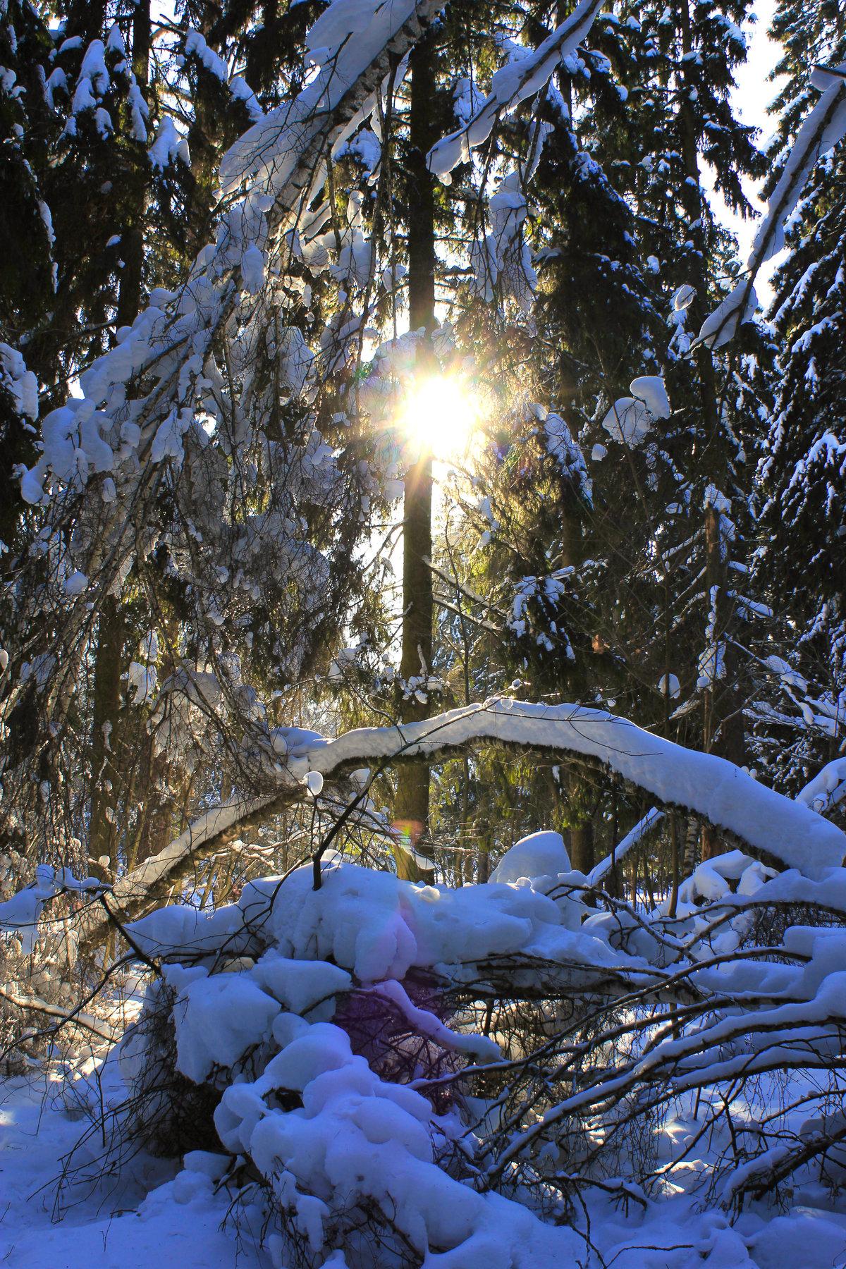 Запоминающиеся фотографии в лесу зимнем