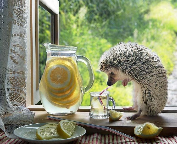 Доброе утро прикольная картинка с животными