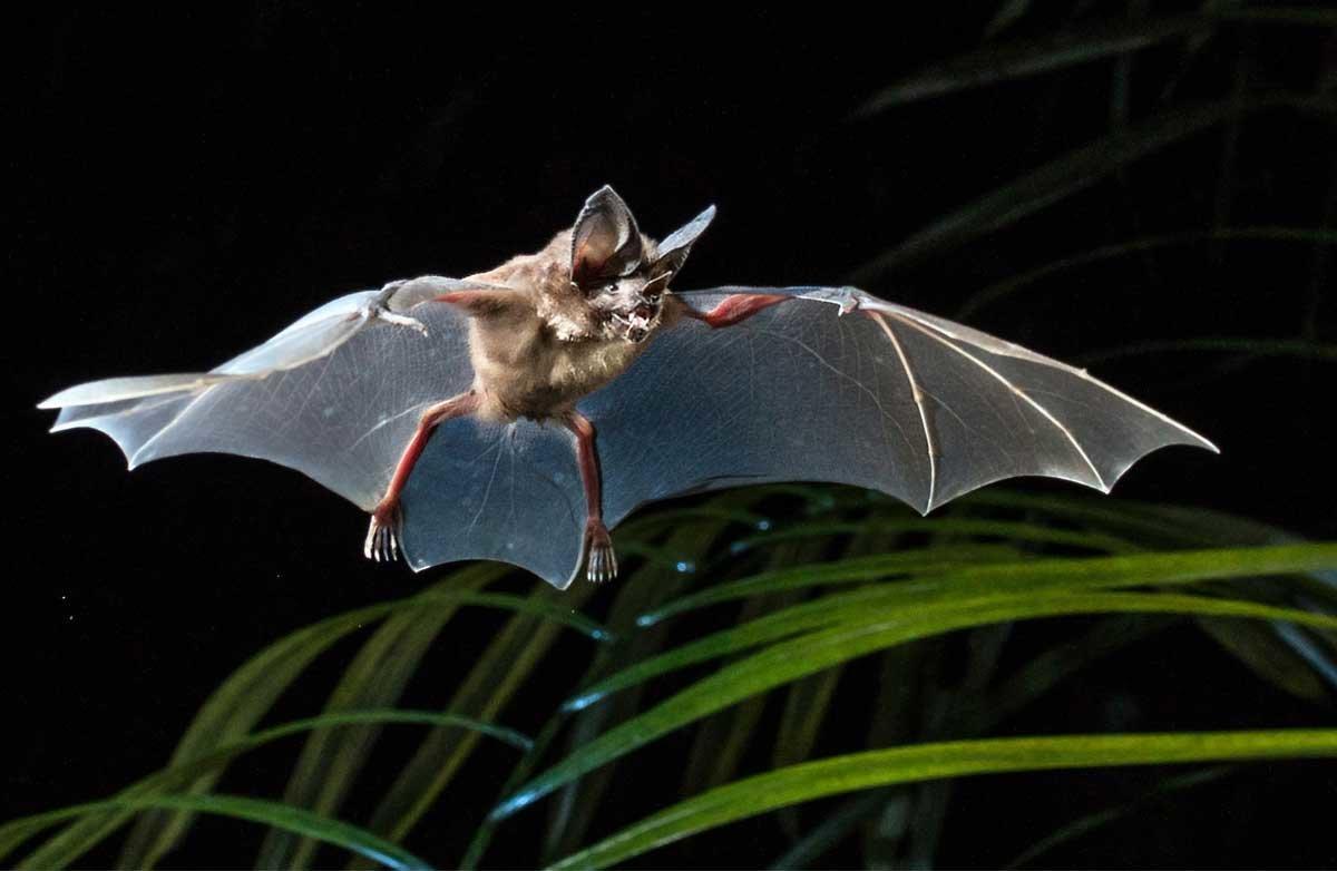лишь сладко, картинка летучий мышонок думаю