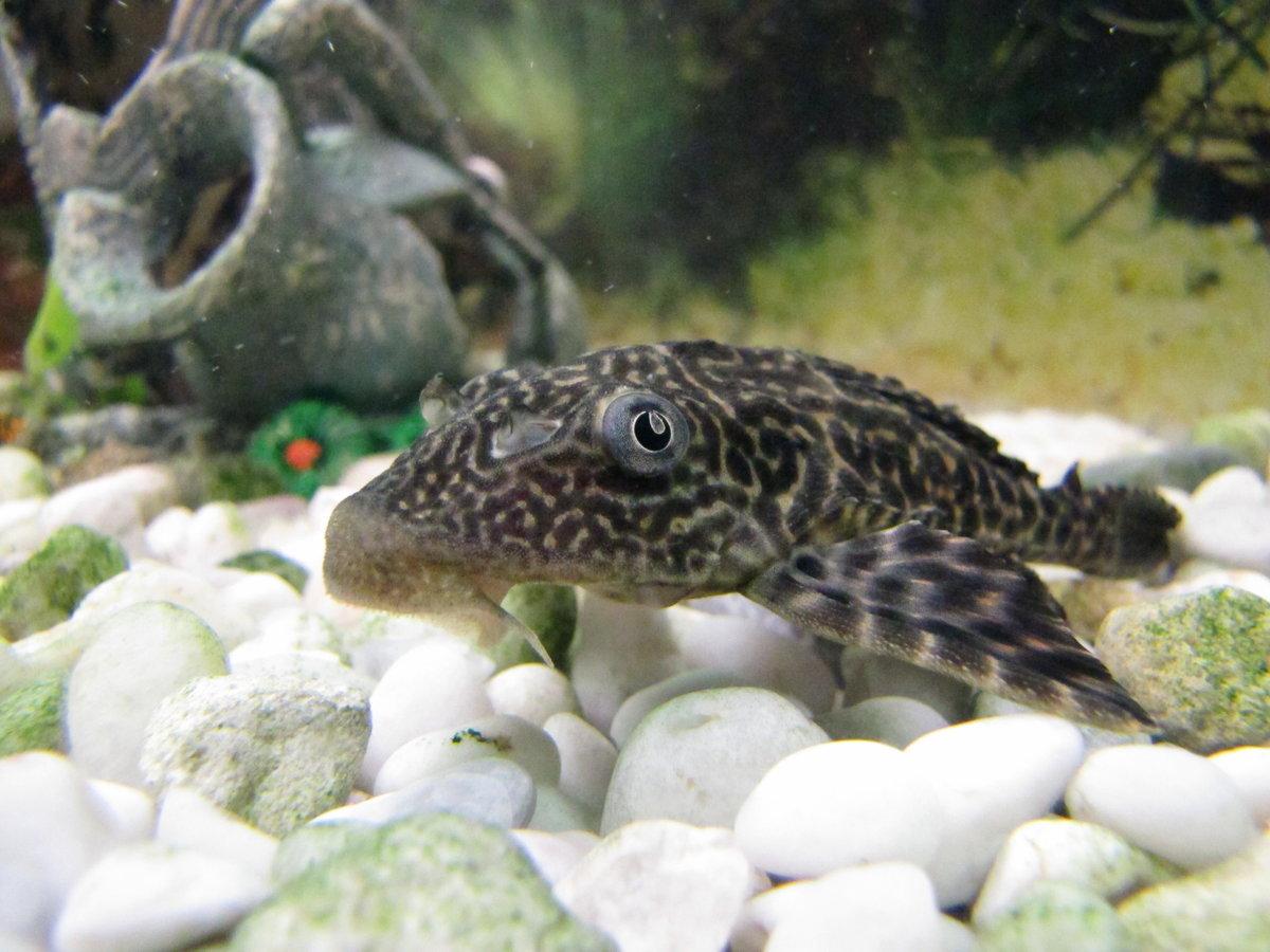 Аквариумные животные фото и названия
