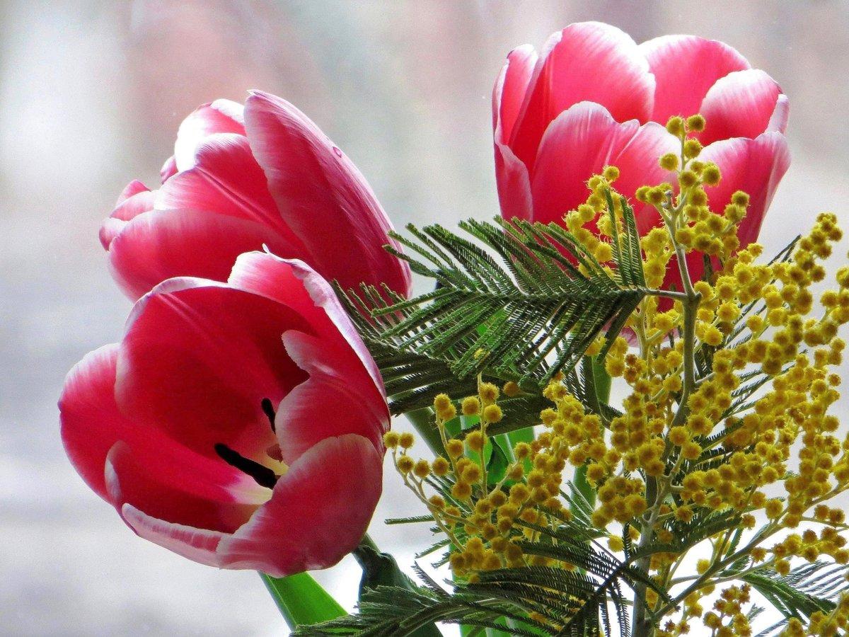 иногда его фото красивых букетов мимозы и тюльпанов американцы следили, чтобы