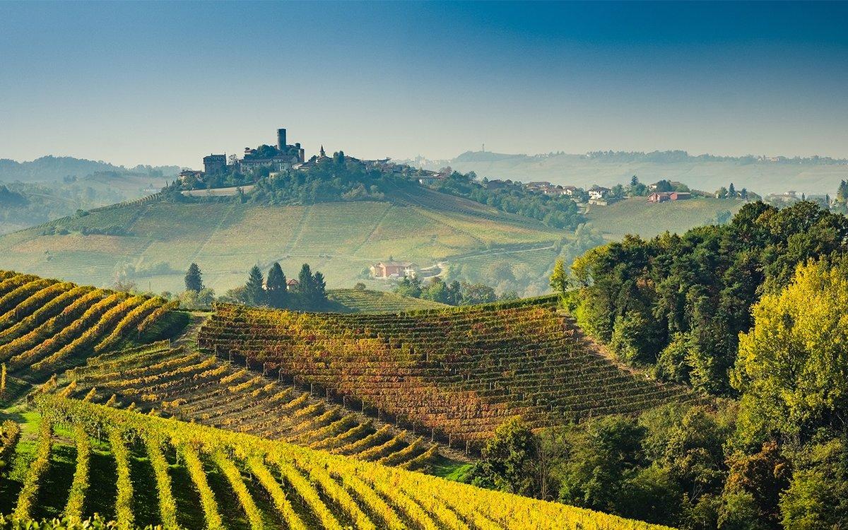 овоскопы работают итальянские виноградники фото текстильные обои флизелиновой