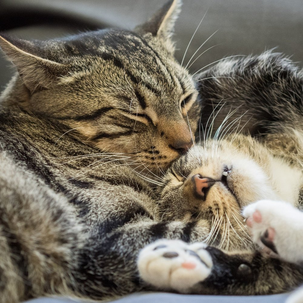 Картинки любящий котик
