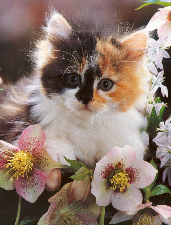 сказали бы, картинки котенок с цветами помарочный