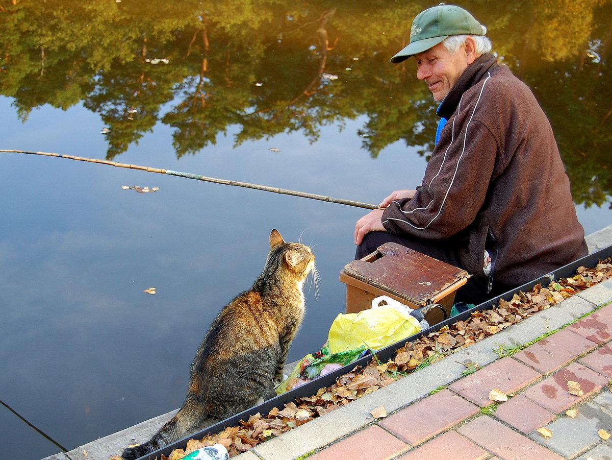 кот и рыбалка картинки для что такое