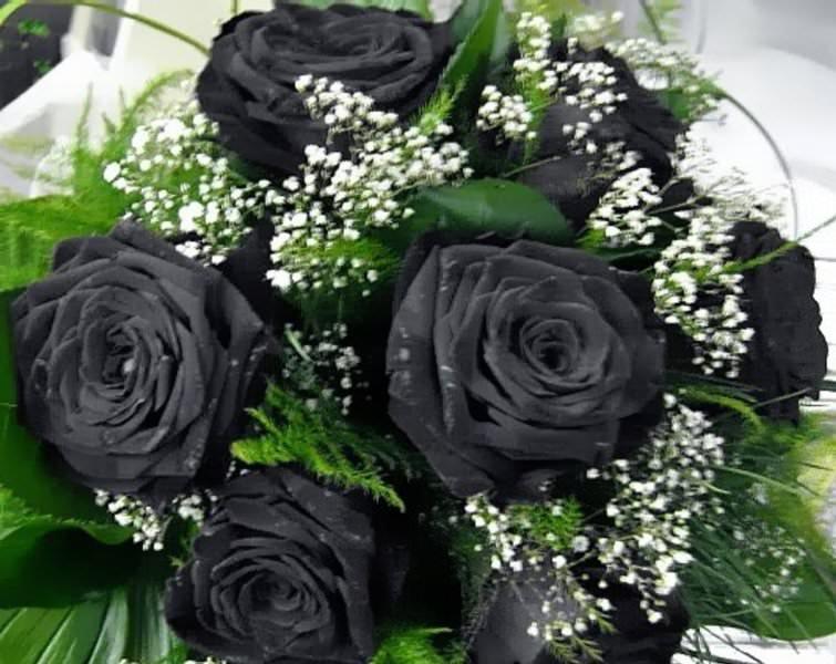 время как прекрасно обворожительное фото в черном цвете ней таятся