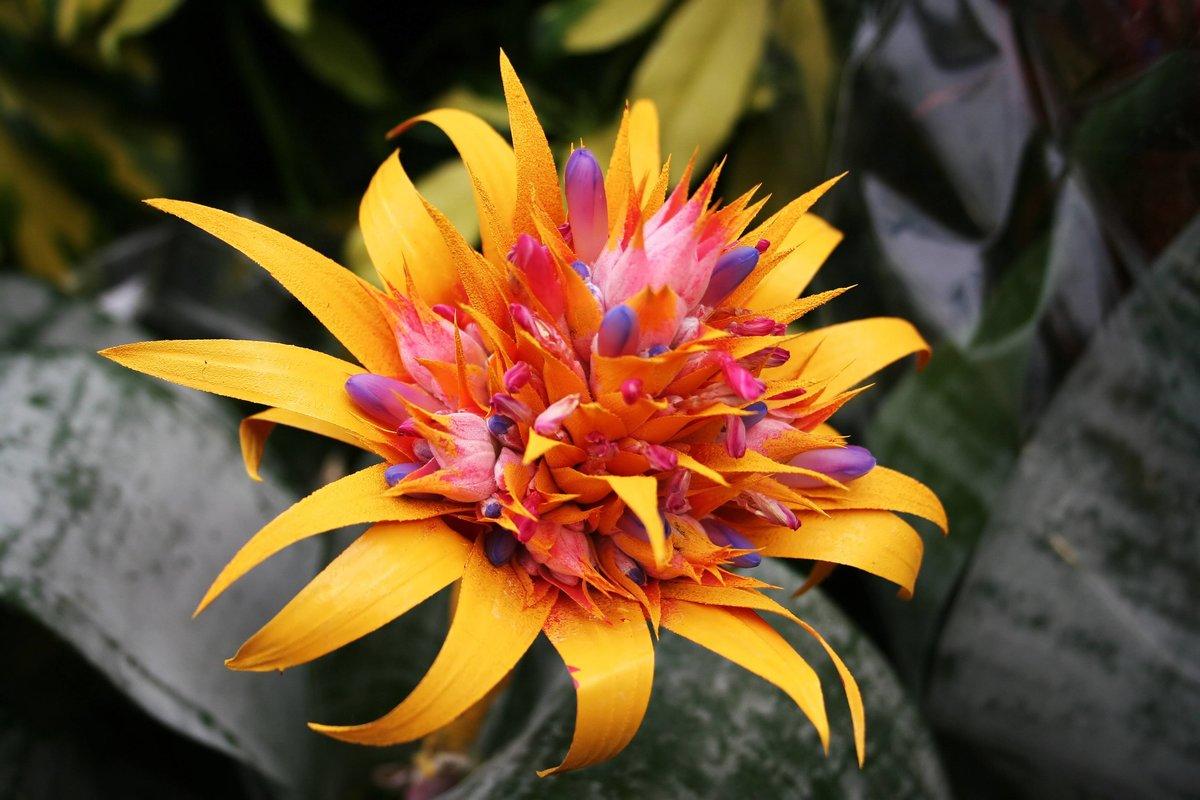 город название экзотических цветов с картинками одним