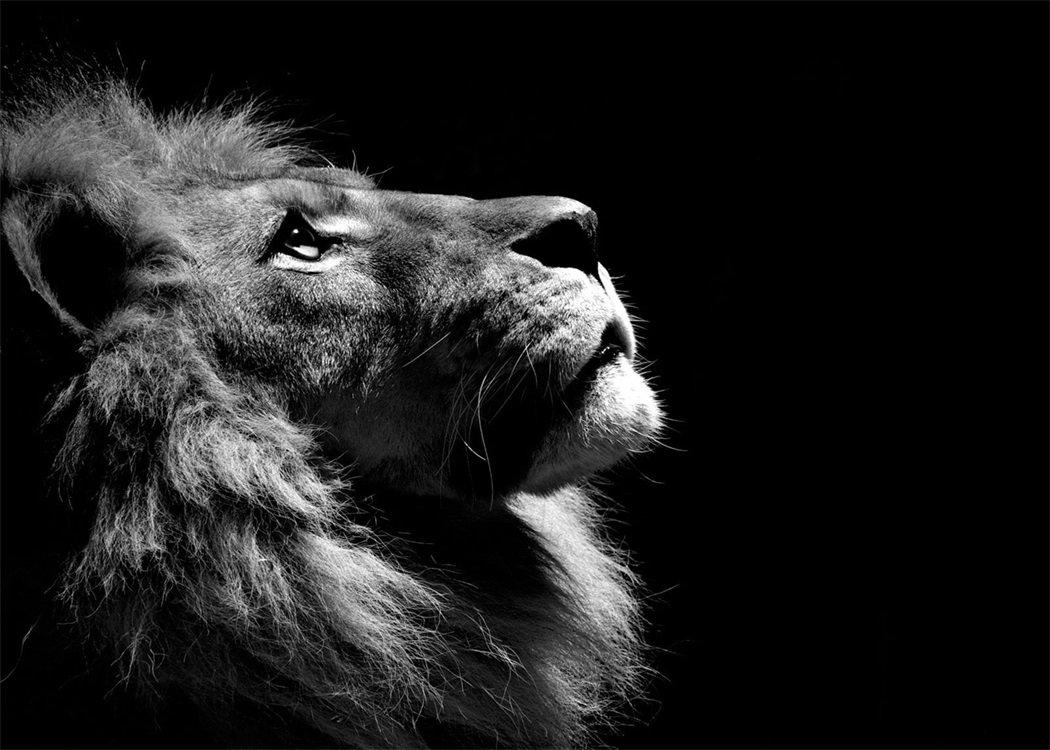 Прикольные картинки львов на аватарку, доброго