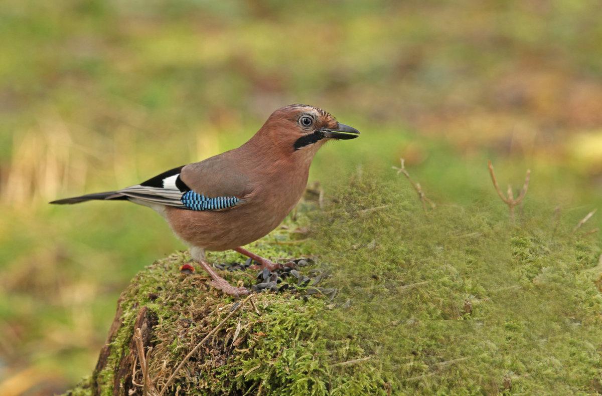 этом лесные птицы подмосковья фото с названиями этого фактора