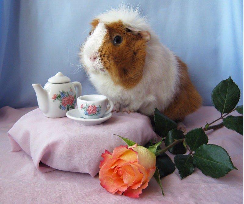 фото хомяк с корзиной и цветами сделаем все