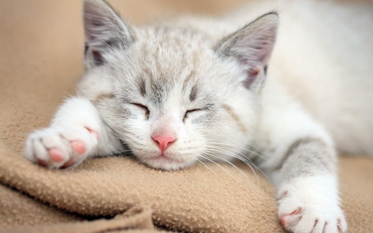 Картинки спящие котики