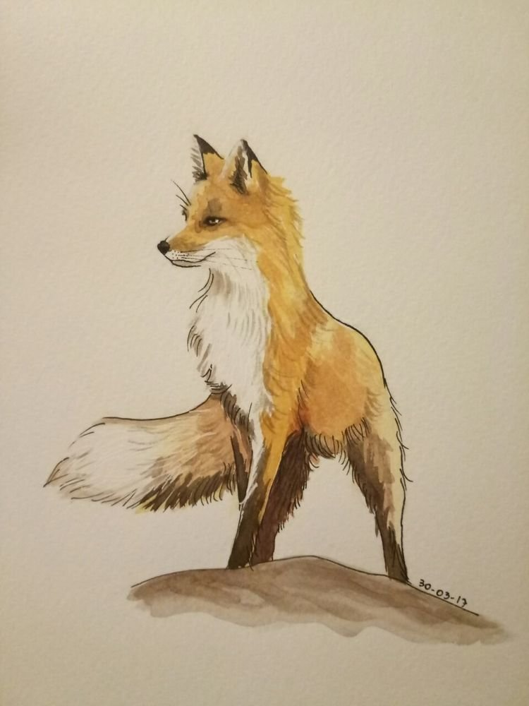 Лисица картинки как нарисовать