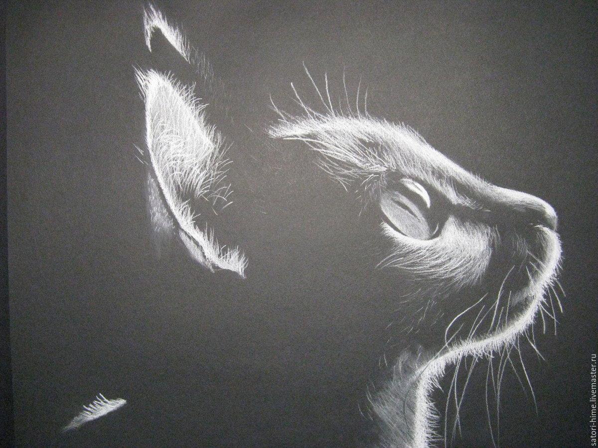 Картинки на черной бумаге, картинки котов