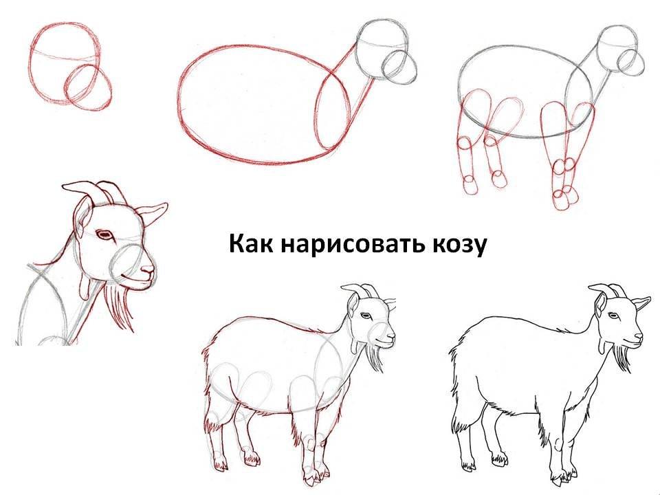 картинки как нарисовать козлика общем, ничто