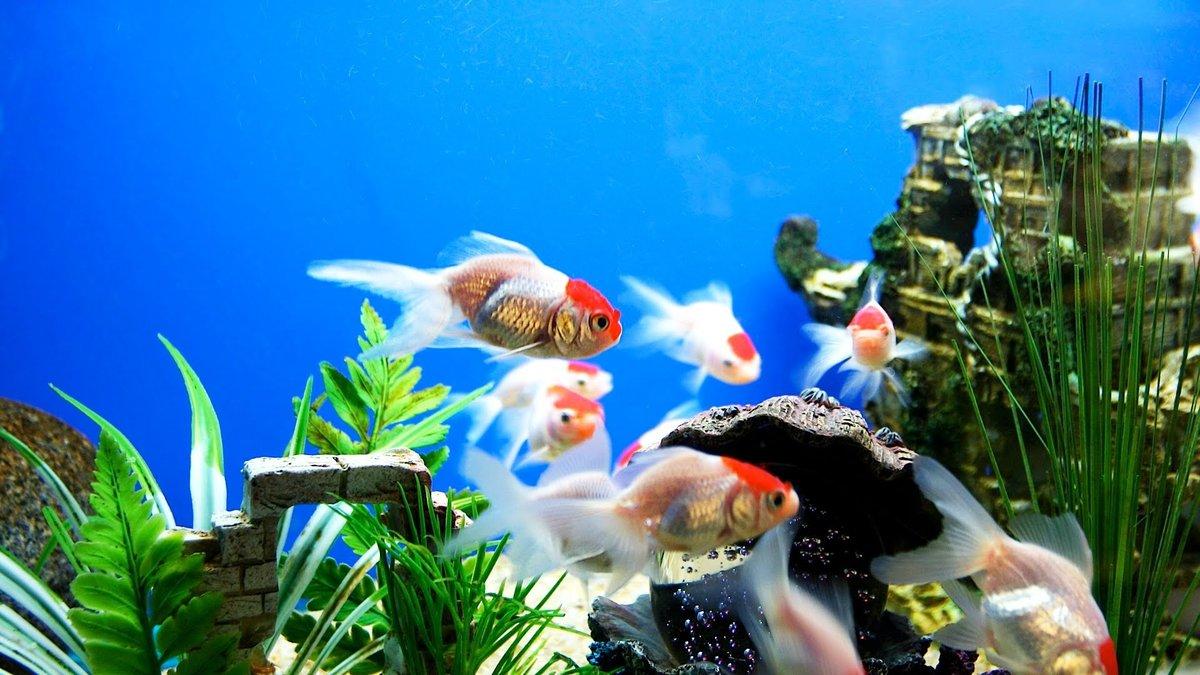 Добрым утром, картинки на рабочий стол рыбки живые они двигаются
