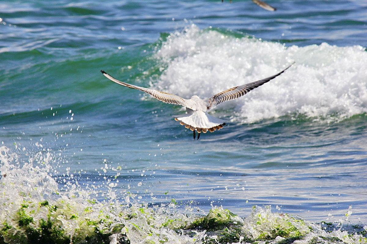 Картинки море волны чайки, днем