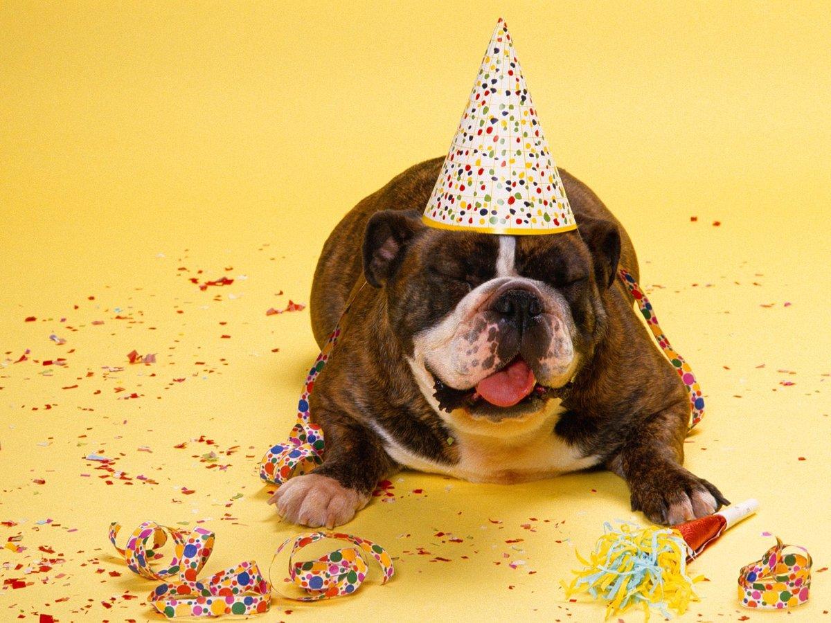 наличии картинки с собачками с днем рождения смешные нашу группу нас