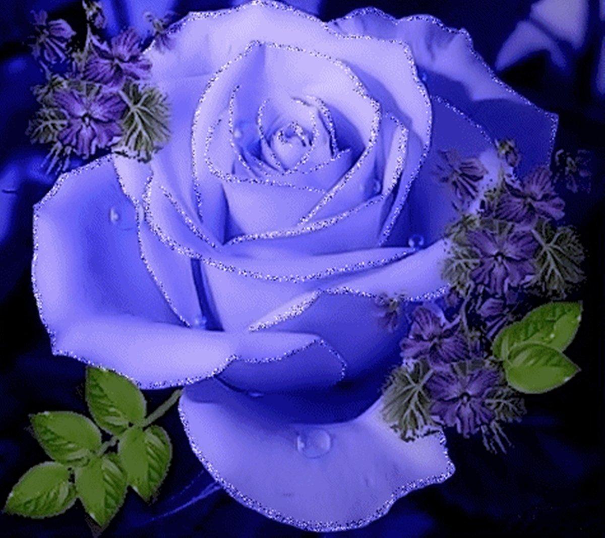 Картинки синие розы анимация