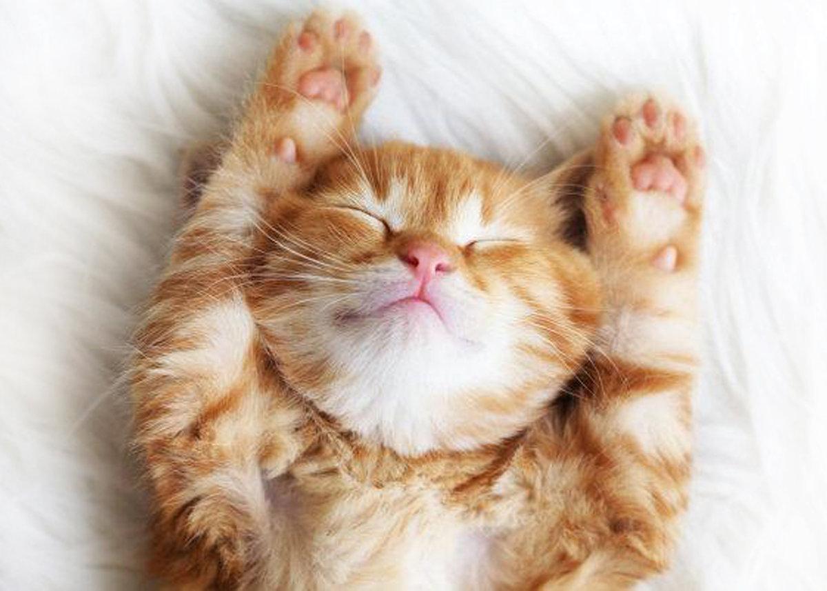 фото сладкие кошечки как преимущества