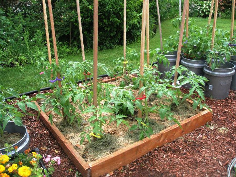 Современный огород варианты и планировка огорода, фото