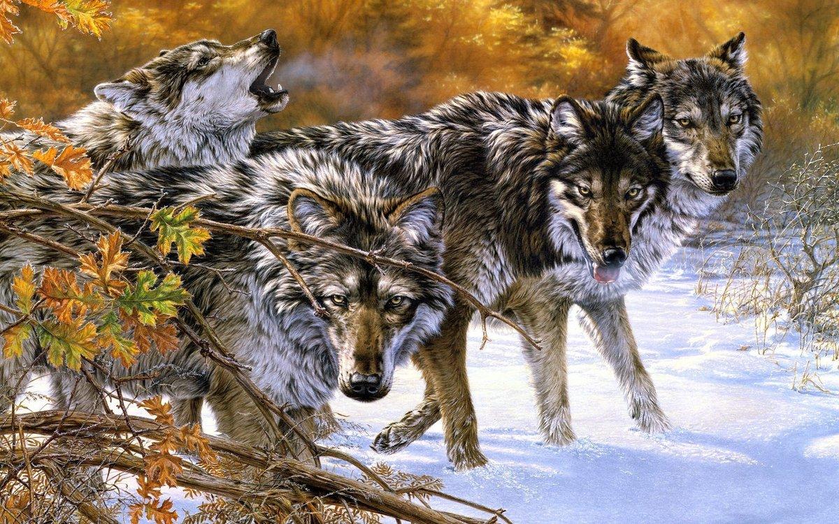 Алые, картинки из волка