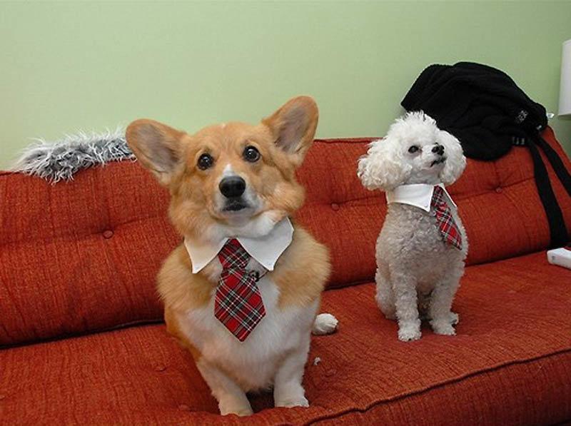 Открытки свадьбе, картинки собачек прикольные