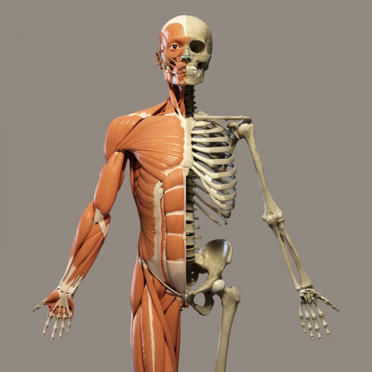 человек скелетов картинки районе озера обустроена
