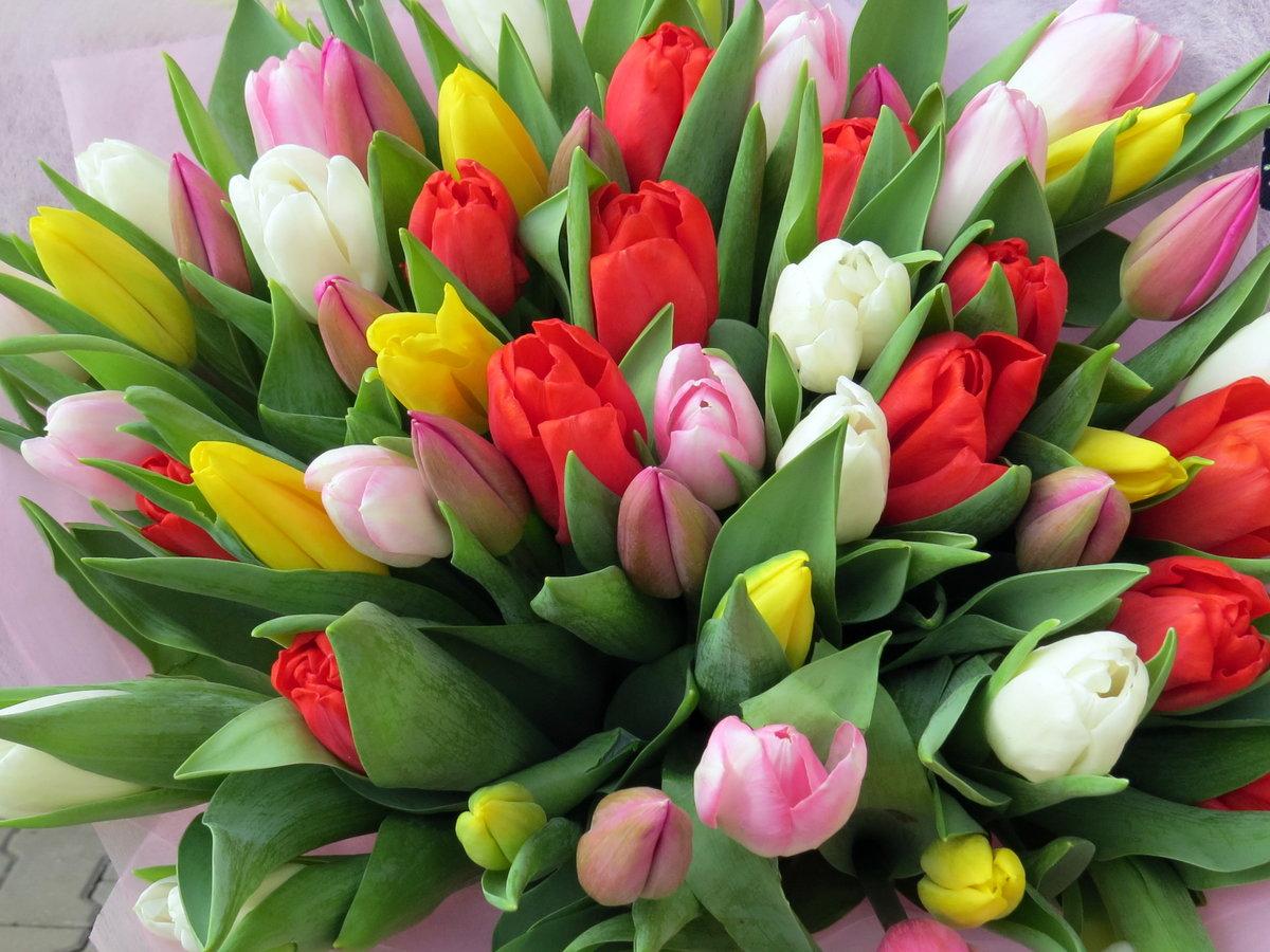 Открытка с днем тюльпанов