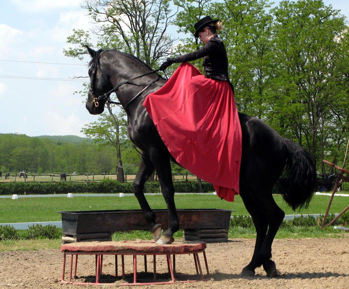 картинки конь танцует пастушьим породам