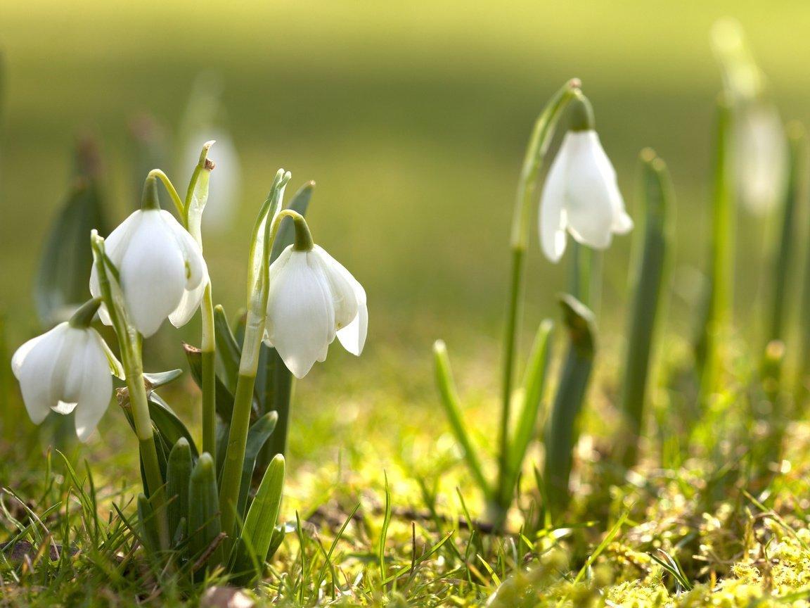 Марта стихами, картинки с мартом природа