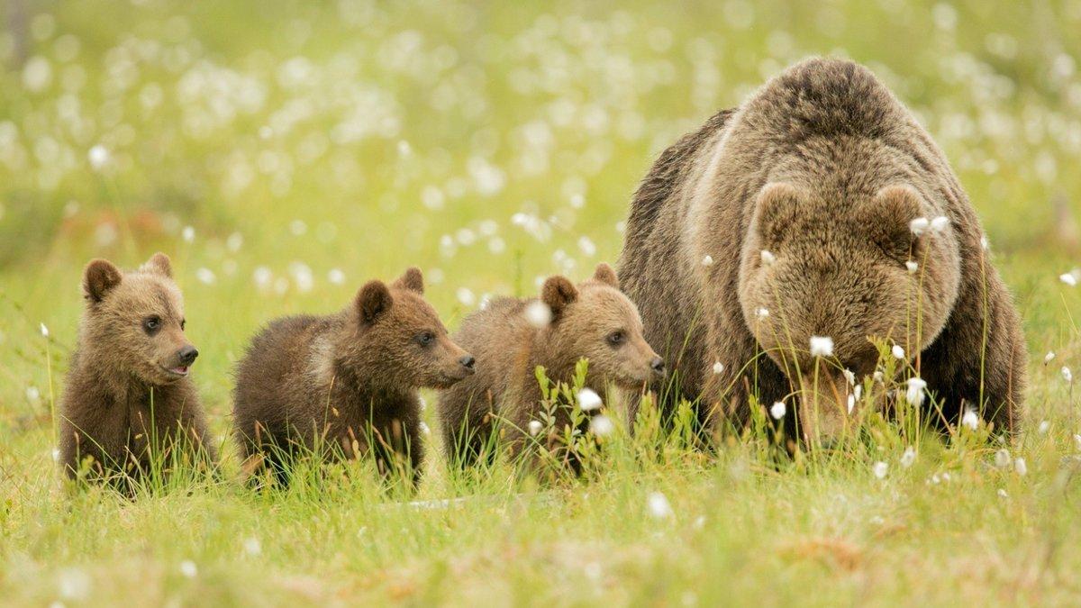 Надписями, медвежата на картинках