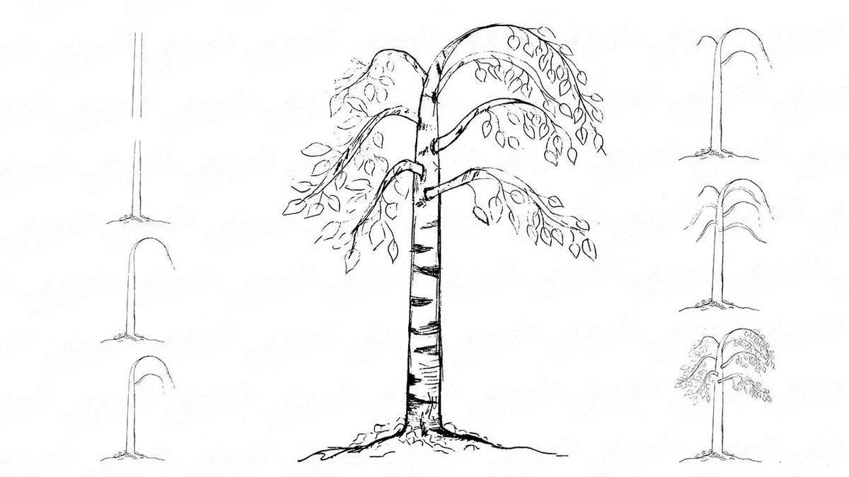 Дерево картинки поэтапно для