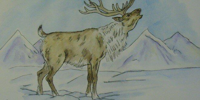 картинки северных оленях рисовать украсить