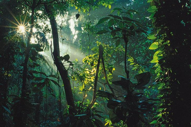 природа в индии - джунгли