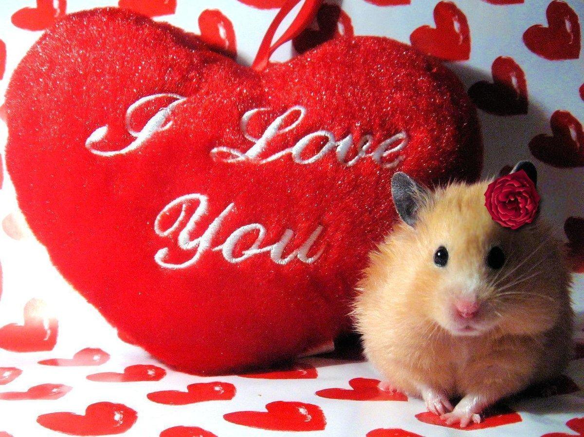 Картинки про любовь с надписью я люблю тебя милый