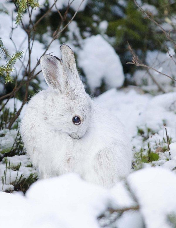 Зима и зайцы картинки