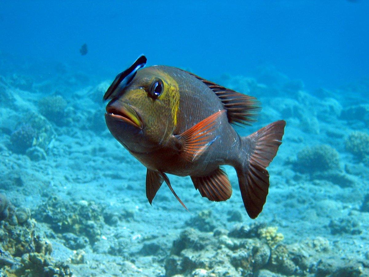 Смотреть картинки рыб в море