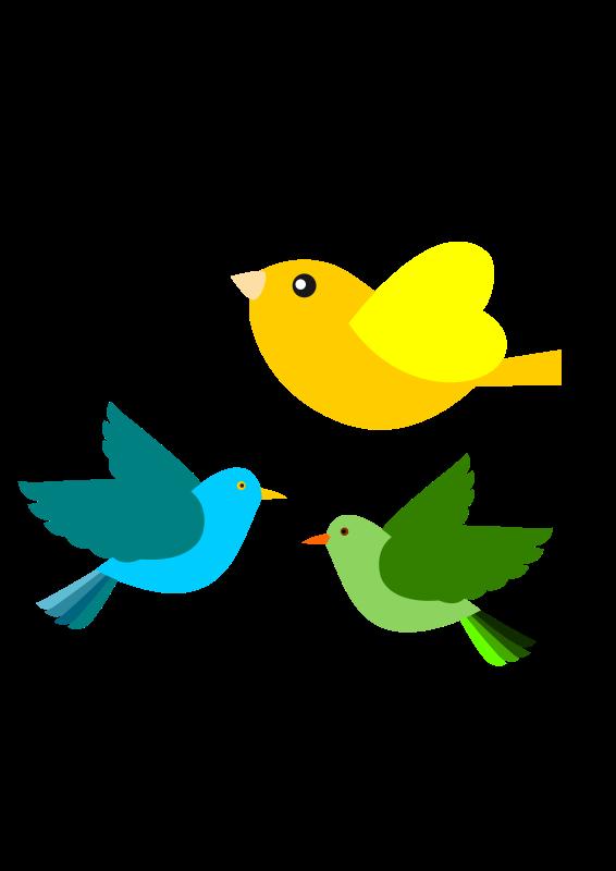 Картинки воробьинообразных птиц выбору