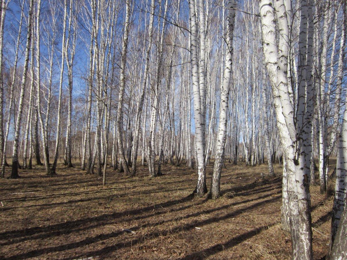 Фотографии весеннего леса