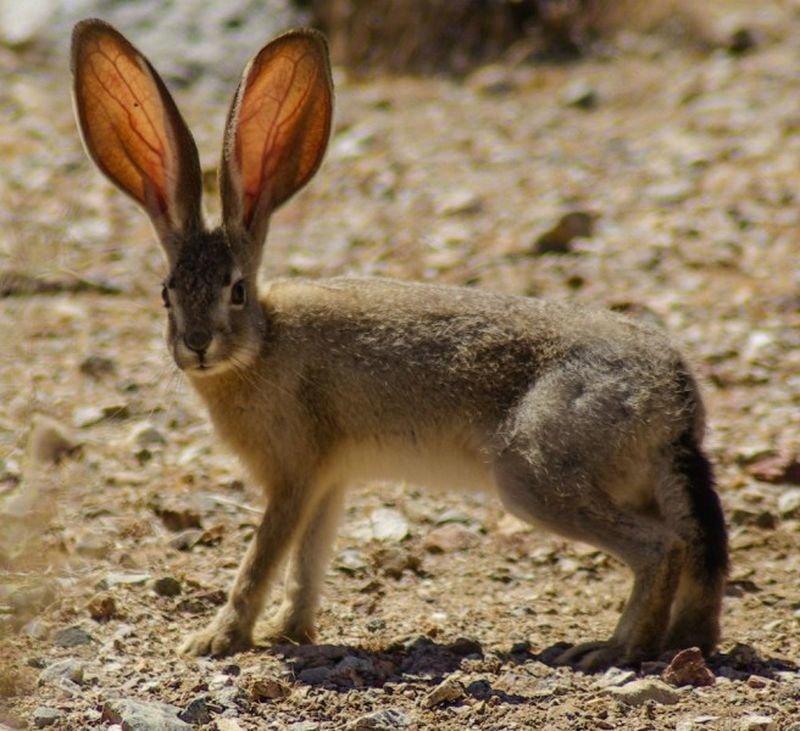 виды зайцев фото с названиями достопримечательностью