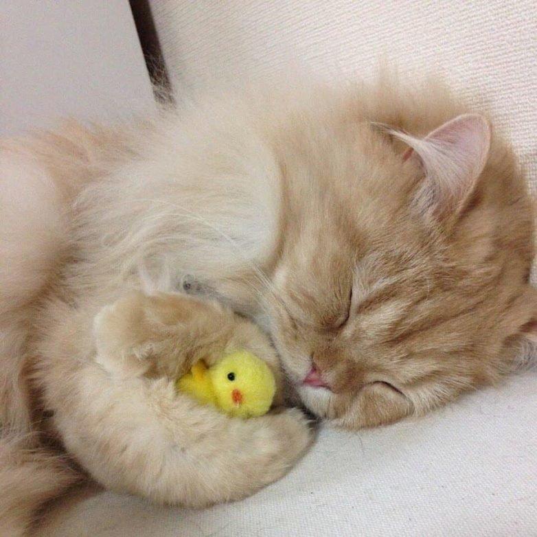 Девочке, прикольная картинка кот спокойной ночи