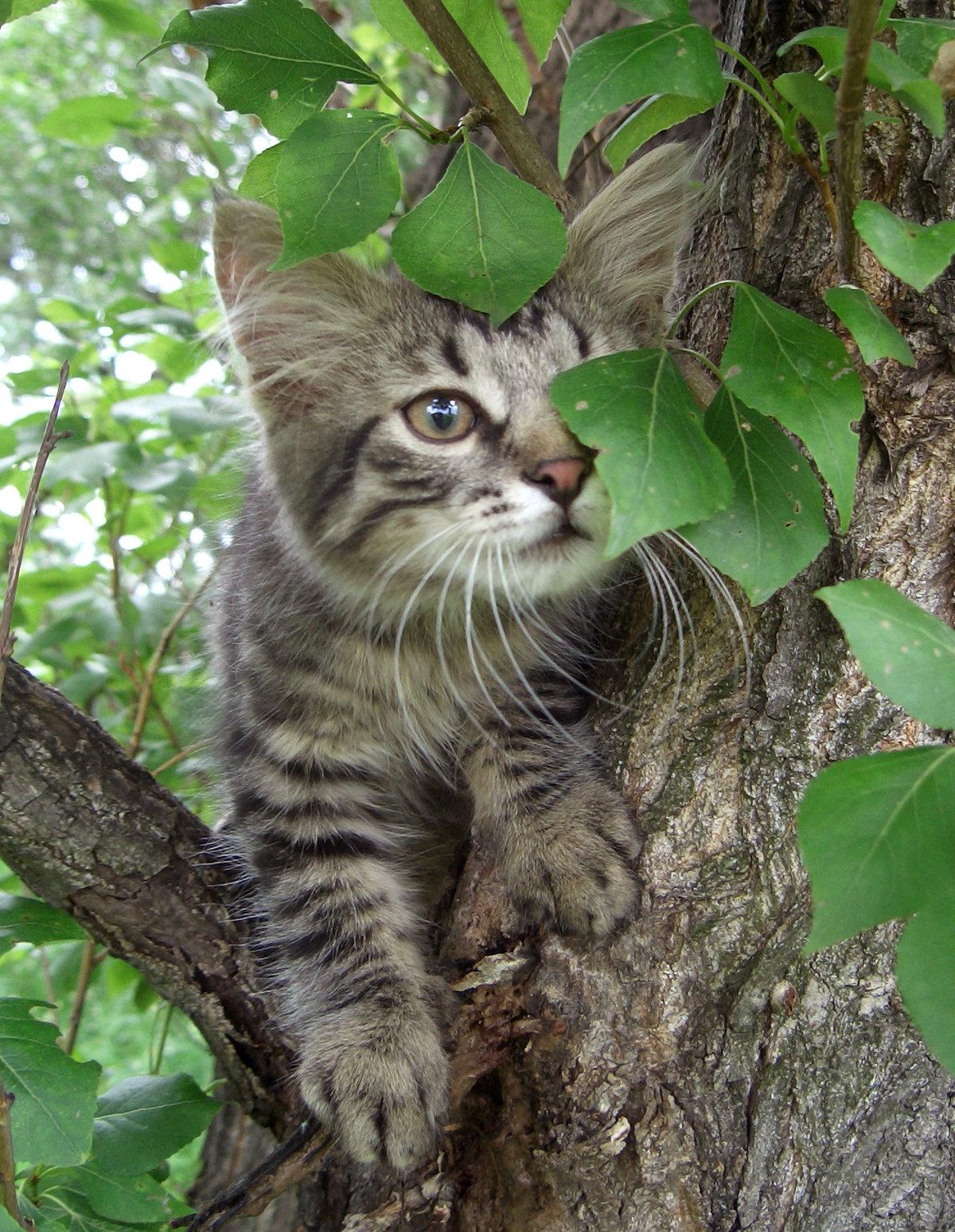 фото кошек на дереве вершине шлема был