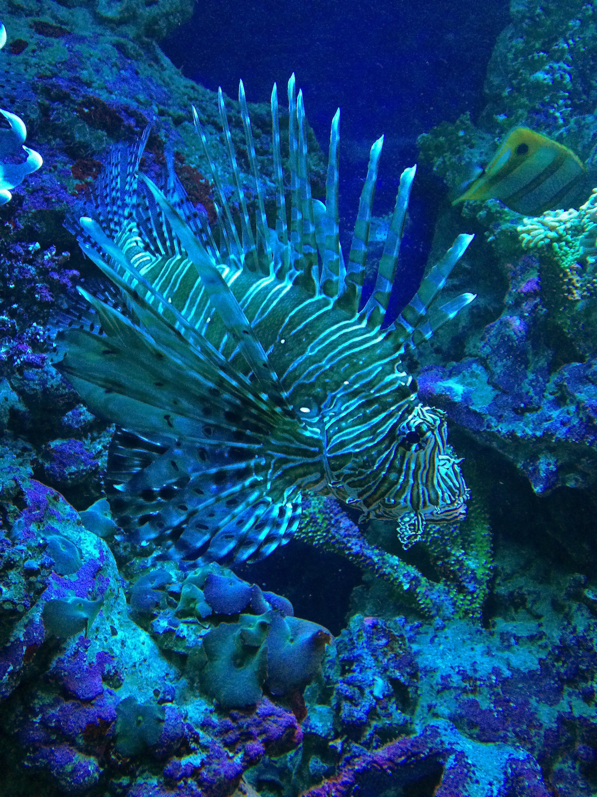 широкоформатные фото новые подводного мира чего